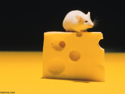 Op-ed: It's Time To End 'Swiss Cheese' Equality