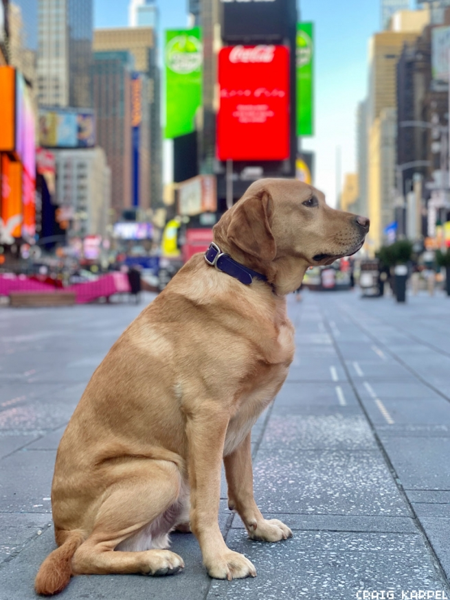 National Adoption Day - Times Square