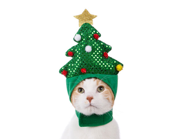 does this cat look indignant?