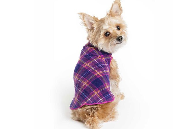 This dog is styling!
