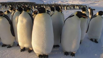 WATCH: Jane Lynch's Voice + Adorable Penguins = The Best Video of the Day