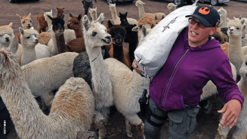 Trans Anarchists, Alpacas, and the Tenacious Unicorn Ranch
